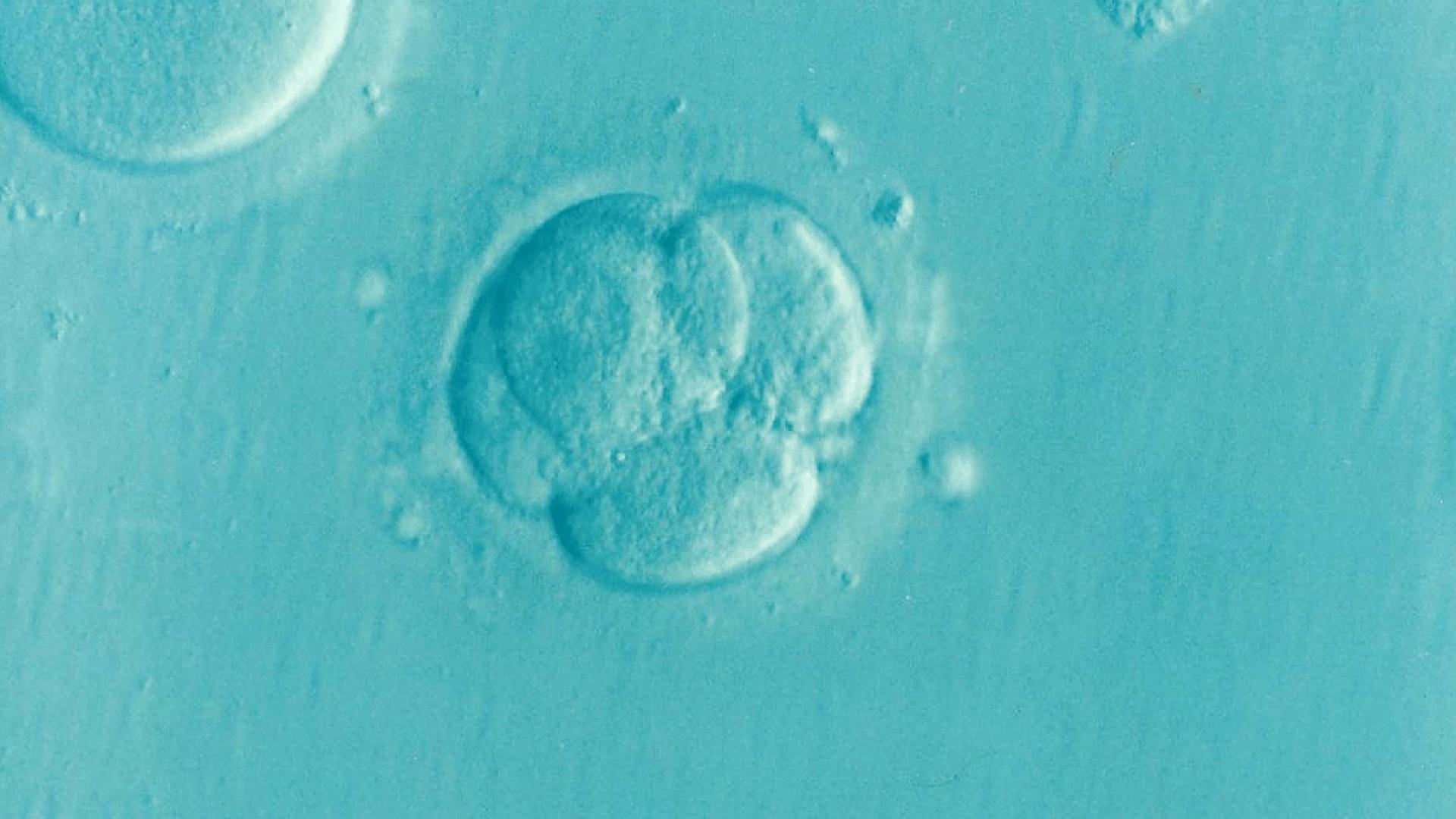 10 όροι σχετικοί με την γονιμότητα που πρέπει να γνωρίζετε